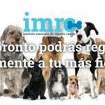Mascotas3