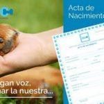 Mascotas4